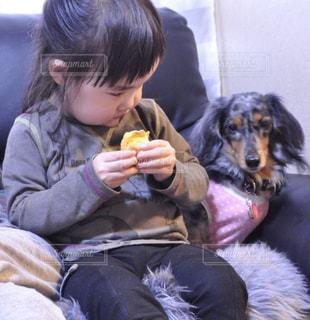 犬,動物,子供,ダックスフンド,ライバル
