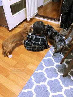 犬,動物,子供,可愛い,お友達,食いしん坊,ダックスフンド,犬と私,ワンコご飯