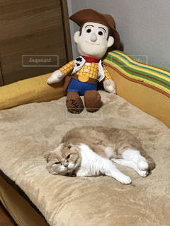 猫,茶色,ミルクティー色