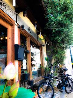 自転車,木,屋外,散歩,窓,樹木,風鈴,睡蓮,お散歩,多治見市,店舗前