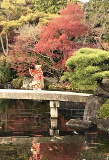鯉と赤の写真・画像素材[2511207]