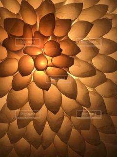 花のような光の写真・画像素材[2623607]
