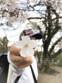 花,春,桜,屋外,帽子,手,男子,手持ち,樹木,人物,小学生,ポートレート,男の子,ライフスタイル,ランドセル,手元,ブロッサム