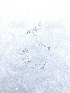 積雪に小鳥の足跡の写真・画像素材[4182468]