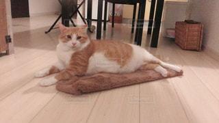 猫,茶色,ねこ,ベージュ,ネコ,ミルクティー色