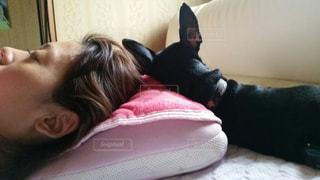 犬,屋内,寝る,人