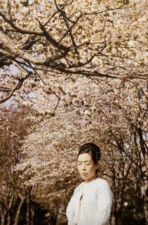 女性,風景,花,桜,屋外,桜並木,樹木,人,昭和,草木,昔の母