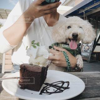犬,カフェ,春,オシャレ,可愛い,トイプードル,チョコレートケーキ,男の子,愛犬,青い,7歳,六甲,私と犬,まだまだ元気