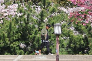 家族,犬,花,春,桜,動物,屋外,人物,人,松,仔犬,プードル,トイプードル,お散歩,草木,さくら,ティーカッププードル