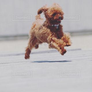 飛行犬の写真・画像素材[2010570]