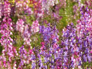花,春,植物,紫,花びら,野外,草木,ガーデン,フォトジェニック
