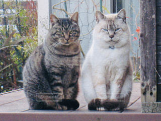 ウッドデッキに座っている猫の写真・画像素材[2292796]