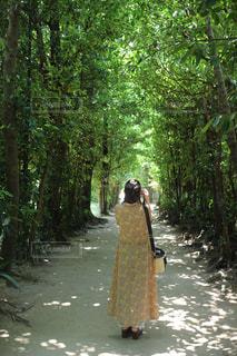 女性,自然,緑,後ろ姿,光,人物,背中,人,後姿,フクギ並木