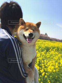 花の写真・画像素材[2009326]