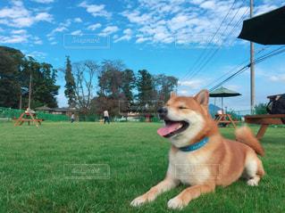 犬の写真・画像素材[2009334]