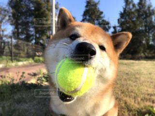 犬の写真・画像素材[2031194]