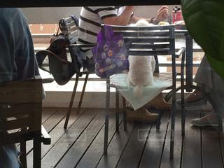 犬,カフェ,椅子,床,いぬ,トイプードル,わんちゃん,白い犬