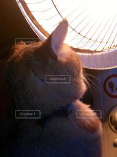 猫,動物,屋内,オレンジ,モフモフ,暖房,見つめる,ミルクティー,キジトラ,後頭部,暖をとる,近すぎ,ハロゲンヒーター