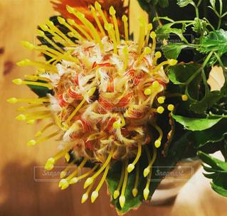 花の写真・画像素材[2005199]