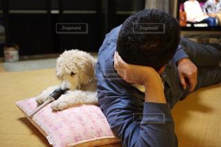 犬,室内,女の子,テレビ,子犬,プードル,父,スタンダードプードル,ワンちゃん