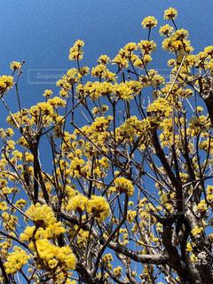 花の写真・画像素材[2012161]