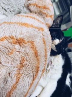 猫の写真・画像素材[2076806]