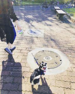 犬,公園,動物,チワワ,晴れ,お散歩,ご機嫌,お出かけ,ポカポカ