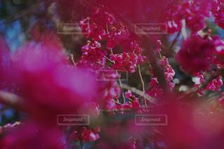 お花で前が見えないの写真・画像素材[2018116]