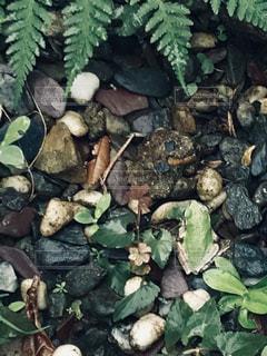 自然,雨,屋外,葉,昆虫,生物,砂利,石,生き物,梅雨,カエル,天気,蛙,草木,雨の日,シダ,湿度,アオガエル,濡れた石