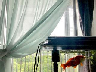 ペパーミントグリーンのカーテンと水槽の写真・画像素材[2177091]