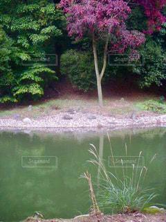 池のほとりの紅葉の写真・画像素材[2513922]