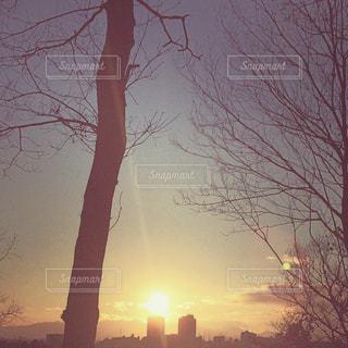 冬の太陽の写真・画像素材[2654986]