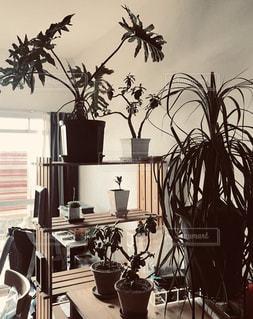 家具と机の上に植木鉢でいっぱいの部屋の写真・画像素材[2744165]