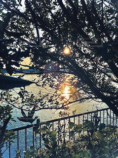 夕日と草木のシルエットの写真・画像素材[2862252]