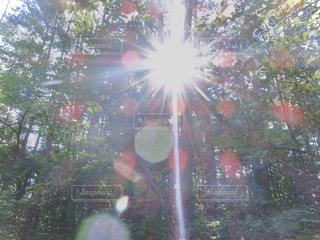 木々に差し込む太陽光線の写真・画像素材[2862613]