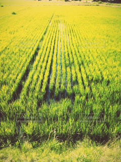 田舎・田んぼ・風景の写真・画像素材[2993214]