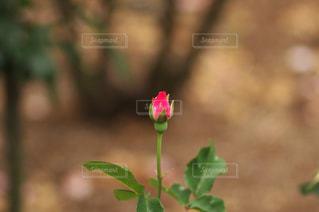 ガーデニング・花のクローズアップの写真・画像素材[3038063]