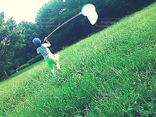 草むらで虫取りする子どもの写真・画像素材[3147186]