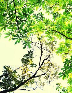 新緑と空の風景の写真・画像素材[3148430]