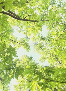 新緑の風景の写真・画像素材[3148526]