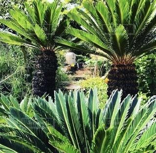 南国の雰囲気のある木の風景の写真・画像素材[3389445]