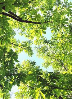 新緑のすきまから見える青空の形〜羽を広げた鳥の形の写真・画像素材[4416028]