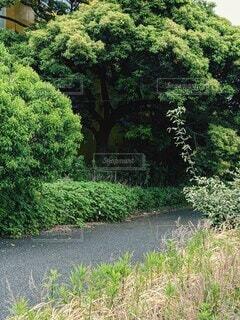 トンネルの入口のような緑の風景の写真・画像素材[4435352]
