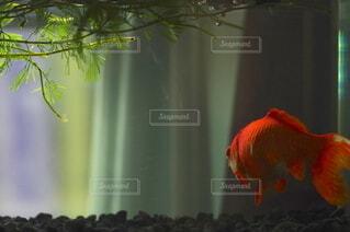 水槽の中の光と影の写真・画像素材[4459907]