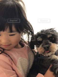 犬,動物,屋内,かわいい,人,ミックス犬