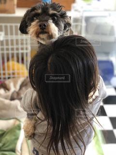 子ども,犬,動物,屋内,かわいい,少女,人物,人,ミックス犬