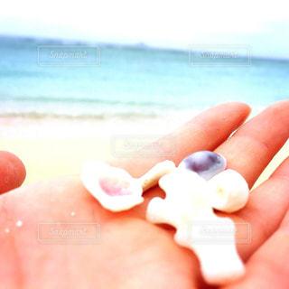 手のひらの貝殻の写真・画像素材[2024257]