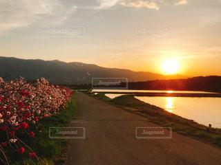水田に輝く夕陽の写真・画像素材[2085002]