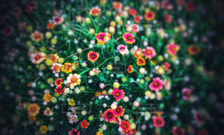 可愛いお花の写真・画像素材[2124667]