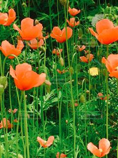 花の写真・画像素材[2054278]
